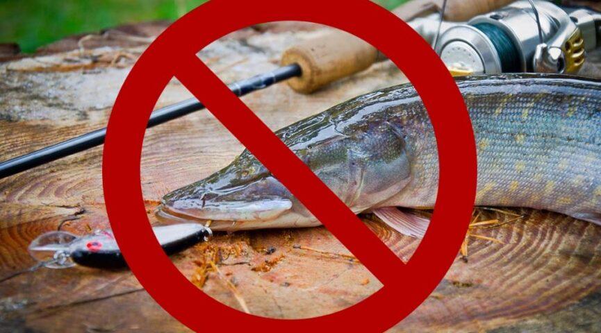 В Нижегородской области введены ограничения на рыбную ловлю из-за нереста